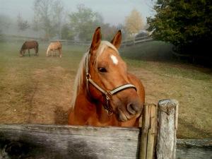 Il cavallo di Marianna